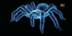 Trapdoor Spider in Monster Bug Wars