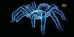 Trapdoor Spider in Monster Bug Wars