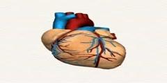 Heart Beats in Human