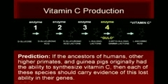 Vitamin C and common ancestry