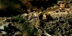 Scorpion vs Centipede