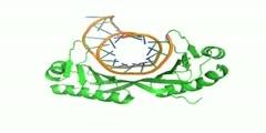 Transcription factor TATA binding protein