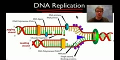 Important Facts About DNA Replication