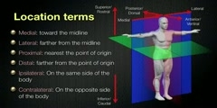 Spatial relationships and anatomical Planes in the human body