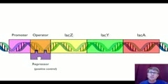 Regulation of Gene
