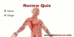 An overview of Pectoral Muscles.