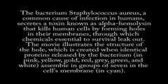 How does alpha hemolysin works?