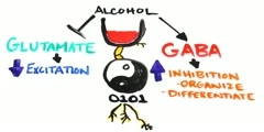 Effects of Alcohol on Brain