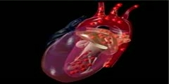 Left view of heart with blood