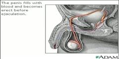 Procedure of Sperm Release