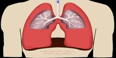 Action of Lungs