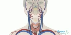 Reason Behind Underactive Thyroid Gland