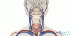 Reason Behind Underactive Thyroid Gland