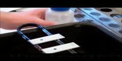 Iimmunofluorescence detection of bacteria - Microbilogy lesson