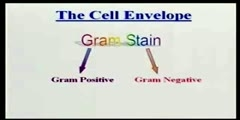 Introduction With Bacterial Cell