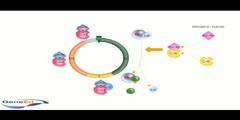 A Look at Cell Cycle of Proteins