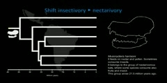 Introduction With Cranial Evolution of Neotropical Bats