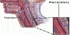 Peristalsis Video