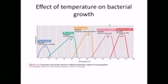 Bacteria clasify by temperature dependent wroth