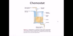 How to make bacteria grow in a chemostat