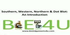 Protein detection techniques, comparison and contrast