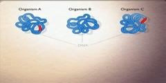How to find dna sequences