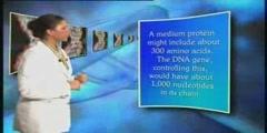 THE MIRACULOUS MOLECULE DNA