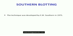 Southern Blotting made easy