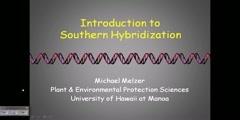 DNA sequences through Southern blotting