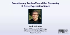 Evolutionary tradeoffs and the geometry of gene expression