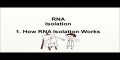 Rna Isolation