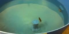 Morris Water Maze Test