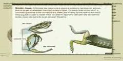 Raptiles: Snake Anatomy