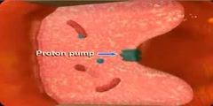 Proton pump inhibitors Animation