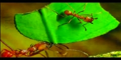 THE MIRACLE IN THE ANT - PART 2