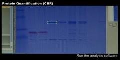Protein Quantification (CBR)