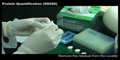 Protein Quantification (OD280)