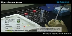 Mycoplasma Assay
