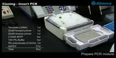 PCR Cloning (I)- Insert PCR