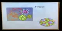 Viral structure part 1 (5min)