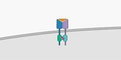 Cytokine Binding or JAK-STAT Signaling Pathway