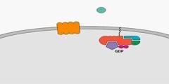 Chemokine Signal Transduction