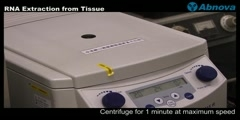 RNA Extraction from Tissue