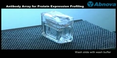 Antibody Array for Protein Expression Profiling