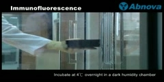 Immunfluorescence