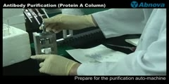 Antibody Purification (Protein A Column)