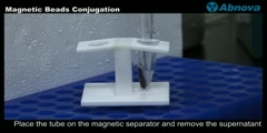 Magnetic Beads Conjugation