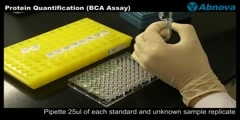 Protein Quantification (BCA Assay)