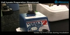 Cell Lysate Preparation (Denatured)