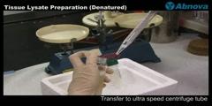 Tissue Lysate Preparation (Denatured)